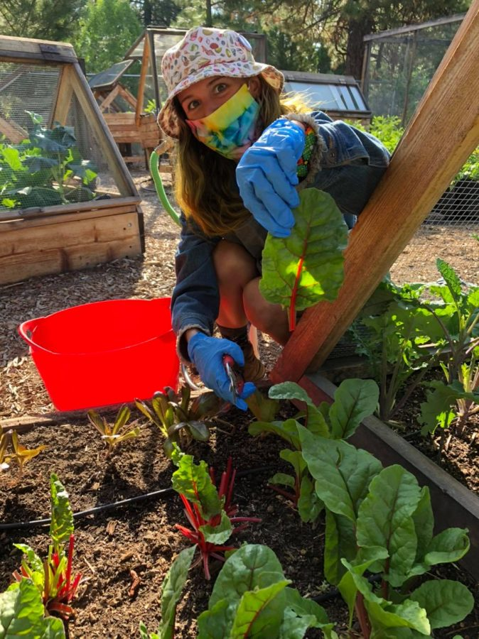 Student+Michelle+Williams+learns+about+agriculture+through+hands-on+experiences.